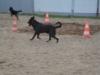 hundebetreuung-0312-092
