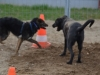 hundebetreuung-0312-098