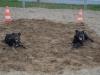 hundebetreuung-0312-108