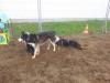 hundebetreuung-0312-132